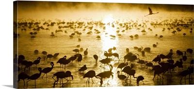 Flamingos at sunrise in Lake Nukuru, Kenya