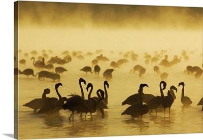 Flamingos at sunrise, Lake Nukuru, Kenya, Africa