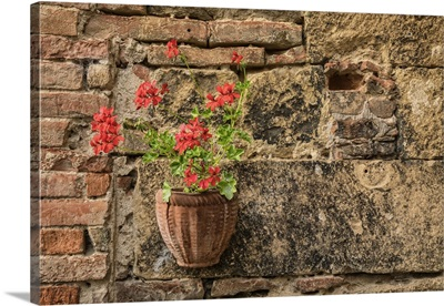 Flowers in courtyard in Monticiello, Tuscany, Italy