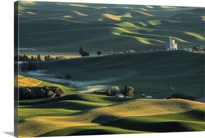 Green wheat fields in the Palouse region of Washington State