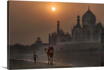 India Camel at the Taj Majal