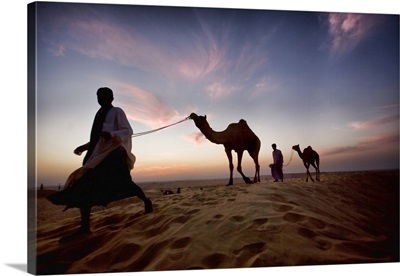 India Camels and their owners at sunset, Rajistan, India