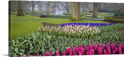 Keukenhof Gardens of Europe, Amsterdam, Holland