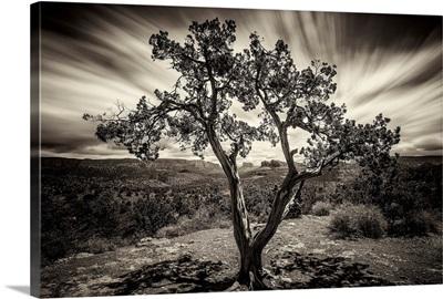 Lone tree at sunset in Sedona, Arizona