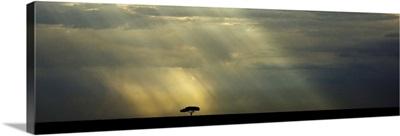 Lone tree on the Masai Mara in Kenya, Africa