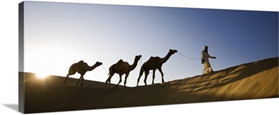 Man walking camels through the desert in India