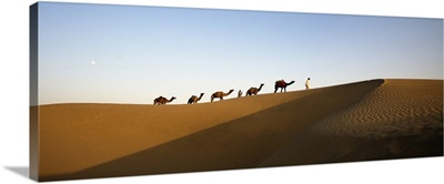 Men walking camels through the desert in India