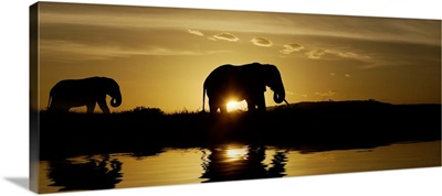 Mother and baby elephant walking by a lake at sunrise in Kenya