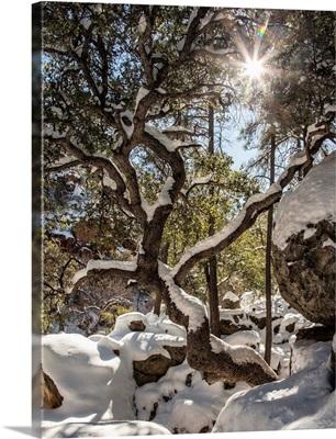 Oak Creek Canyon in the snow in Sedona, Arizona