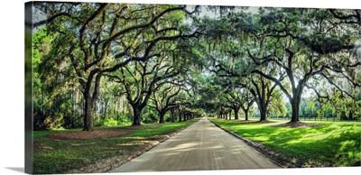 Oak tree lined road at Boone Hall Plantation, Charleston