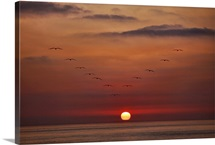 Ocean Birds at Sunset