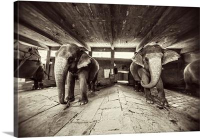Painted elephants in their sleeping area in Jaipur, India