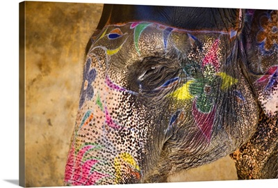 Painted Indian elephant, Rajistan, India