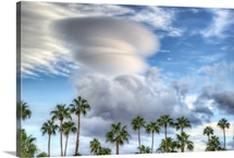 Palms on a Cloudy Day, Palm Springs, California