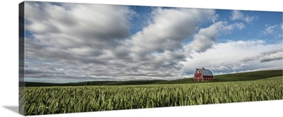 Red barn and green wheat fields in the Palouse, Washington