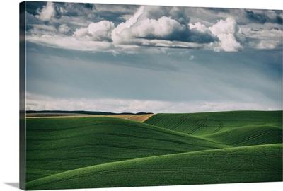 Rolling green wheat fields in the Palouse, Washington