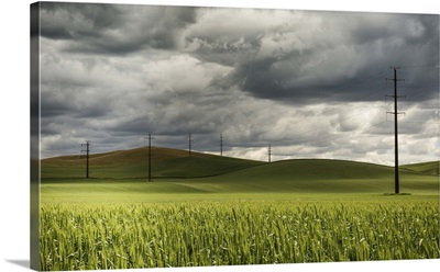 Rolling wheat fields and power lines in the Palouse, Washington