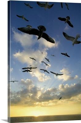 Seagulls over the ocean, Santa Monica, California