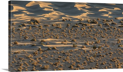 The amazing Mesquite Sand Dunes at Death Valley National Park