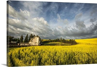 The Dahmen Barn and yellow Cannola Fields in the Palouse, Washington