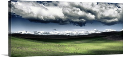 The rolling hills of the Palouse region in Washington