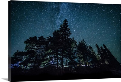 Trees and the night sky in Bar Harbor, Maine