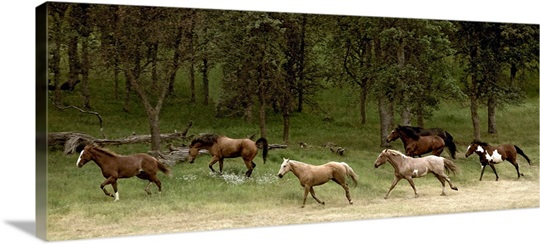 Western Horses running, near Yosemite, California