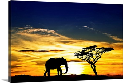 A lone elephant in Africa