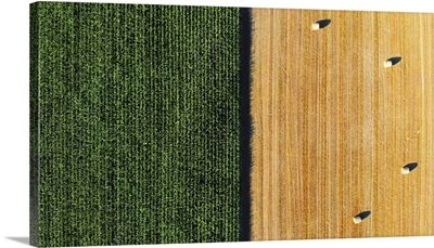 Aerial View On Green Corn And Yellow Field With Hay Bales