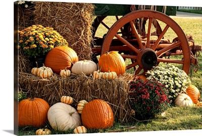 Autumn Pumpkins and Mum Display