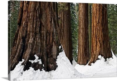 Bachelor And Three Sisters Winter Scene, Mariposa Grove, Yosemite National Park