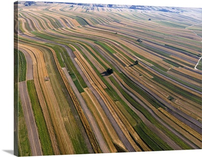 Beautiful Crop Rows In Farmland