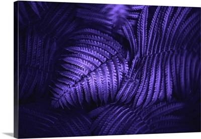 Beautiful Fern Leaves In Ultraviolet