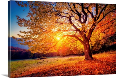 Beech tree on a hill slope with sun beams in mountain valley