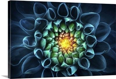 Blue-Green Chrysanthemum Flower