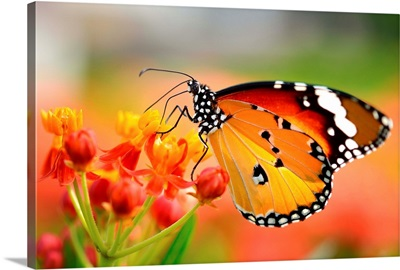 Butterfly On Orange Flower In Garden