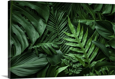 Close-Up Nature View Of Green Leaf And Palms, Tropical Leaf