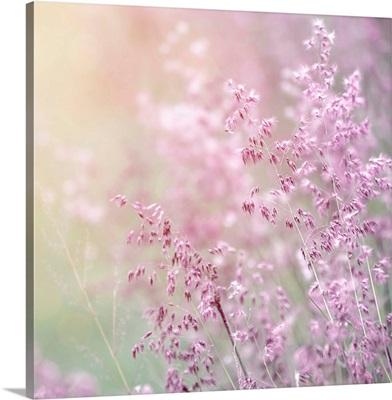 Close-up shot of lavender flowers