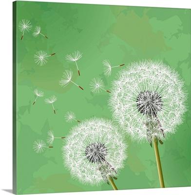 Dandelions on Green