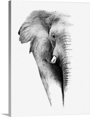 Elephant - Black and White