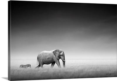 Elephant With Zebra On Open Plains Of Etosha