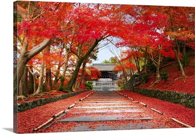 Entrance Of The Temple Bishamon-Do Covered With Red Autumn Leaves, Kyoto, Japan