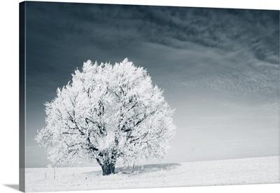 Frozen Tree On A Winter Field
