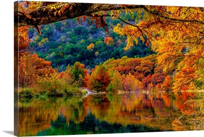 Giant Cypress Trees Reflected in the Clear Waters of the Frio River, Texas