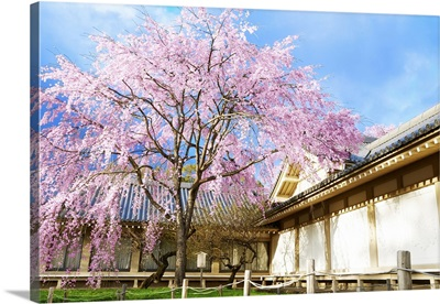 Japanese Cherry Blossom With A Traditional House