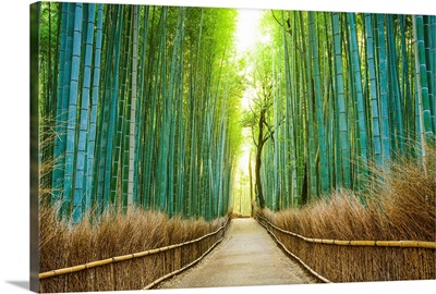 Kyoto, Japan, bamboo forest.