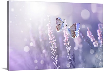 Lavender Flowers And Two Butterflies In Rays Of Summer Sunlight