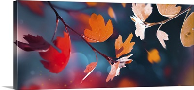 Leaves In An Autumn Forest