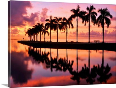 Line of silhouetted palm trees reflected in still water in Florida