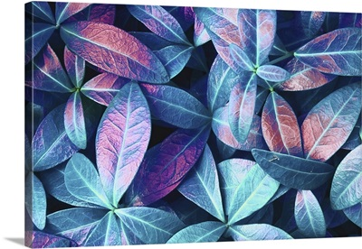 Natural Macro Texture Of Beautiful Leaves Toned In Blue, Purple, And Pink